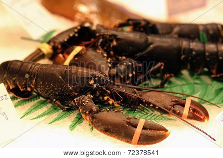 lobsters on the market