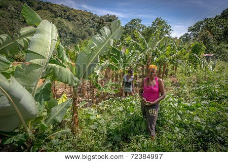 Unidentified women working on field near Polo Barahona Dominican Republic