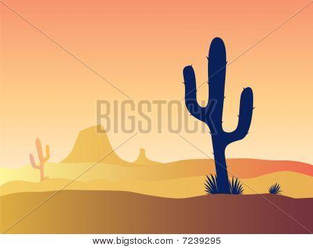 Por do sol deserto do cacto