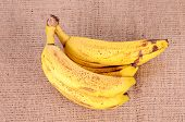 picture of festering  - Bunch of over ripe bananas on sackcloth background - JPG