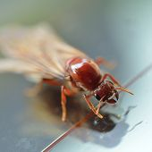 foto of ant-eater  - close up little insect termite white ant - JPG