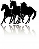 pic of running horse  - vector silhouettes of a three galloping purebred horses - JPG