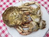foto of cooked crab  - Dish cooked crab - JPG
