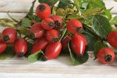 foto of dog-rose  - Rose Hips also known as rose haw fruit of the Dog Rose - JPG