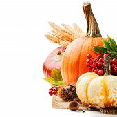 image of rowan berry  - Autumn setting with various pumpkins and rowan berry
