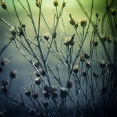foto of dead plant  - Abstract nature background with wild flowers and plants silhouettes at foggy mysterious sunrise - JPG