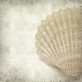 pic of cockle shell  - textured old paper background with cockle shells - JPG