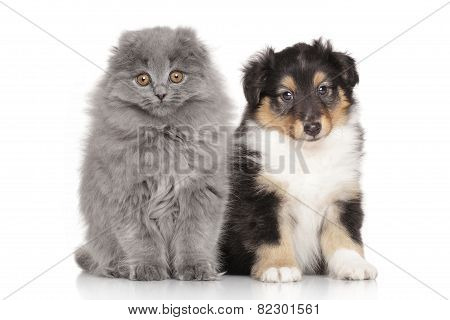 Kitten And Puppy On White Background