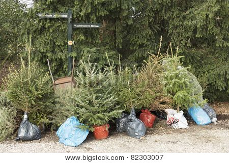 Christmas trees are reduced for replanting.