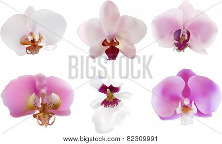 illustration with pink orchids collection isolated on white background