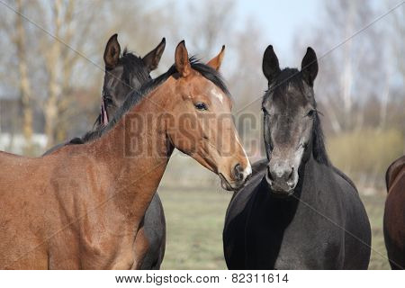 Two Adorable Horses Nuzzling Each Other