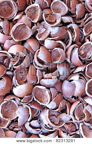 Background Of The Lot Of Shell Of Hazelnut