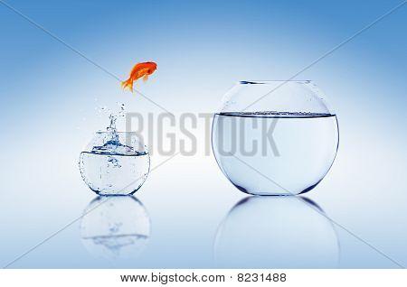 Salto de peixinho
