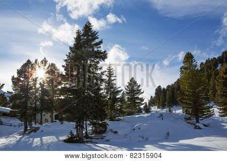 Green Fir Trees In The Austrian Alps