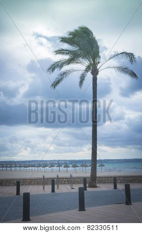 Palm Tree Playa De Palma Vertical
