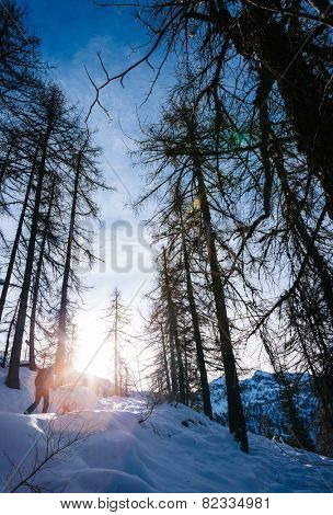 Winter landscape. Man walking in a snowy woods in italian Alps, Val d'Aosta, Europe.