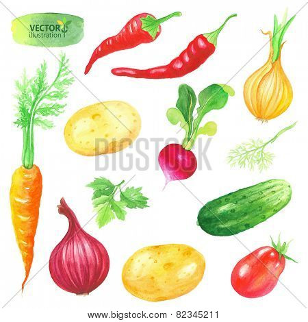 Watercolor collection of vegetables, vector illustration.