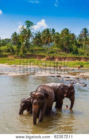Elephants At The Watering