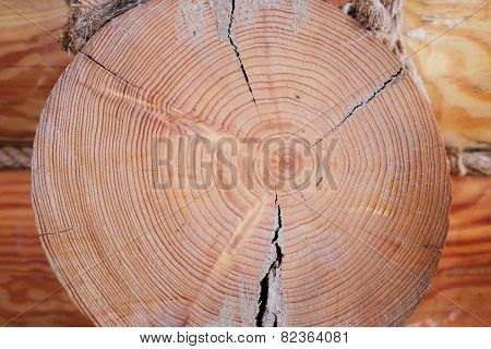 Close up cross section of tree trunk, texture