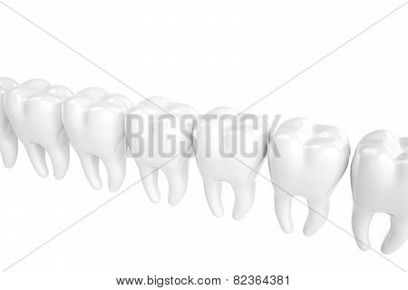 The molars built in row on a white background