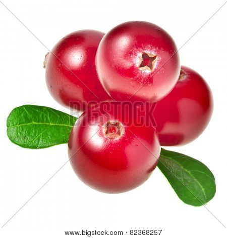 fresh cranberries isolated on white background