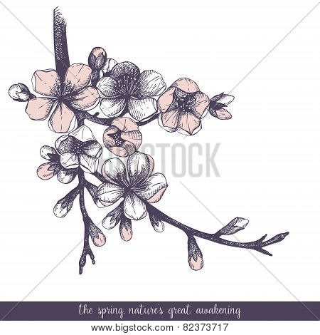 Spring flower illustration.