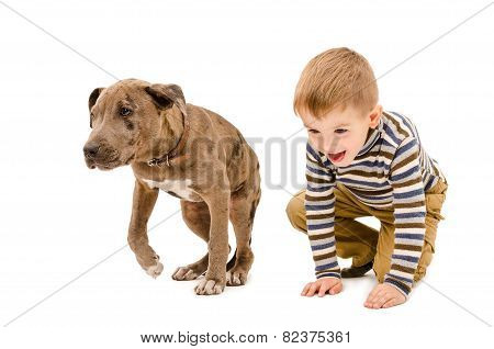 Boy and puppy pit bull playing together