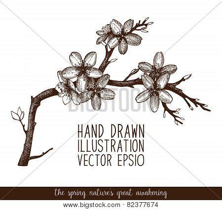 Spring flower illustration.