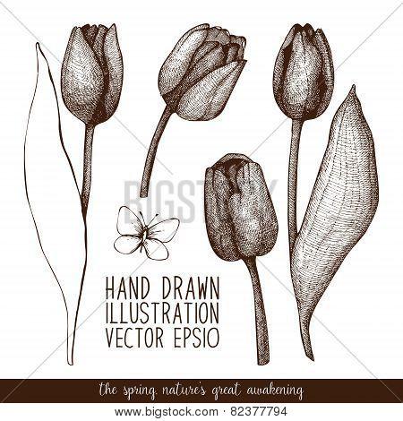 Vector tulip sketch set.