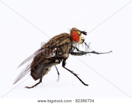 fly with isolated background