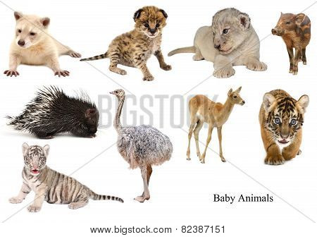 Baby Animals Collection
