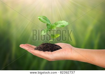 Small Tree In Female Hand On Green Nature Concept