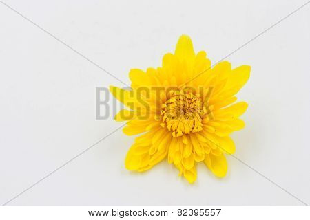 One Yellow Chrysanthemum Flower On White Background