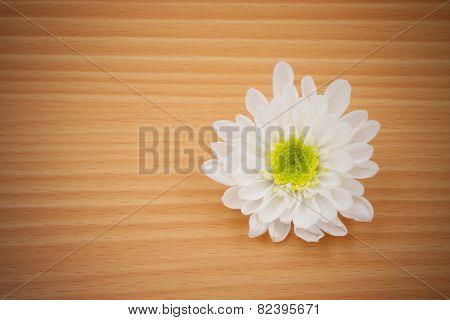 One White Chrysanthemum Flower On Wooden Background