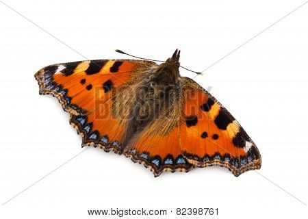 Butterfly (small Tortoiseshell).