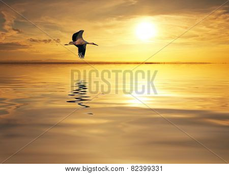 the majestic flight