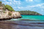 image of algae  - Image of beautiful beach with the algae - JPG