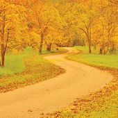 picture of walnut-tree  - Walnut trees and footpath in autumn - JPG