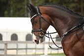 foto of breed horse  - Beautiful sport horse portrait in horse show - JPG