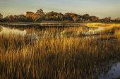 picture of tall grass  - Tall golden grass surrounding a pond on an autumn evening - JPG