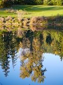 stock photo of chateau  - An irrigation pond on the Chateau Whistler Golf Course taken just before sundown with a beautiful reflection of the trees behind the 2nd green - JPG