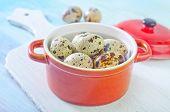 foto of quail  - quail eggs - JPG