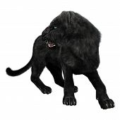 picture of panther  - 3D digital render of a black panther looking back isolated on white background - JPG
