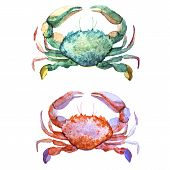 image of crab  - Beautiful watercolor vector pattern with corals shells and crabs - JPG
