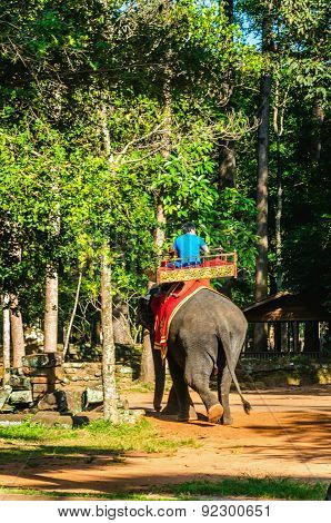 Tourists ride an elephant on howdah chair Cambodia