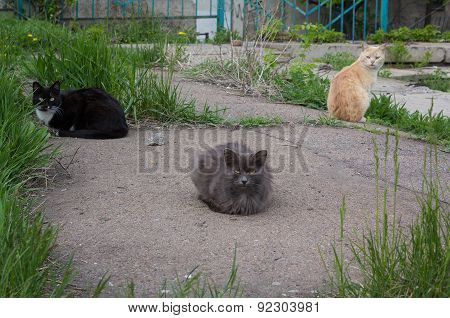 Three Cats Left Homeless Shelter In Search Of Food