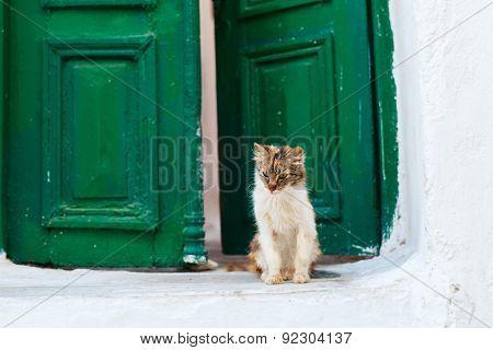 Cat outdoors in front of colorful green door in Greece