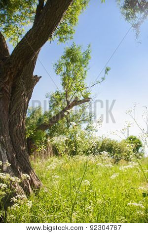 Wild Plant And Wood Against The Blue Sky