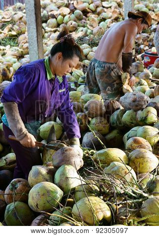 Asian Worker, Coconut, Vietnamese, Mekong Delta