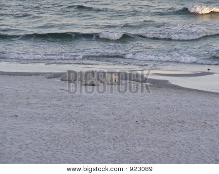 Waves Rolling In On Beach